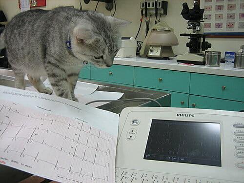 貓咪心臟病的症狀 心電圖