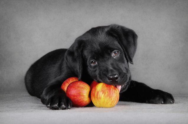 狗狗鮮食DIY 均衡飲食入門筆記 水果