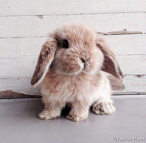 寵物過敏退散 鏟屎官愛心不打烊 兔子