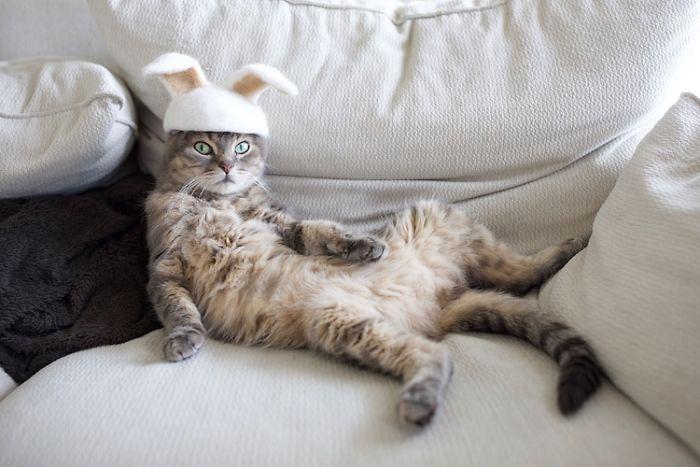 貓咪掉毛 自產自製創意配件 序