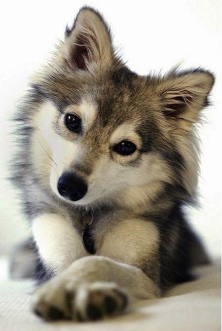 狗狗社交 八面玲瓏的交際高手 序