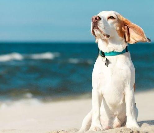 狗狗愛玩水 游泳時必懂品種差異 序