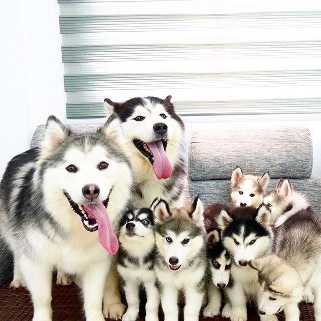 狗狗認人 社會化黃金時期別錯過 序