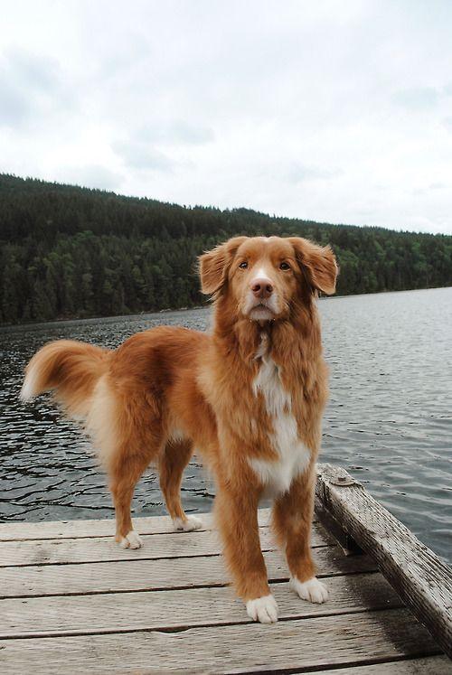 狗狗有話說 肢體語言大解密 自信