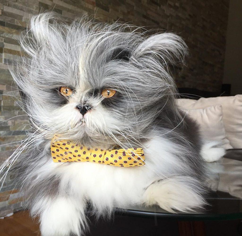 貓狗不分 寵物明星Atchoum的魅力 波斯