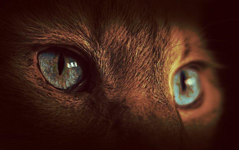 毛小孩眼睛 瞳孔大小暗藏警訊 症狀