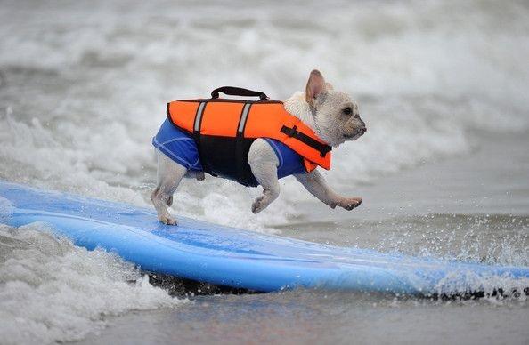 狗狗怕水 玩耍揪團破解障礙 救生衣