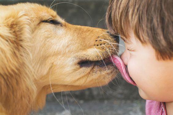 狗狗舔傷口 自帶防護的治癒本能 本能