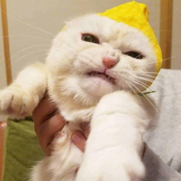 貓咪 試穿了貓奴新買的帽子..牠好痛苦 拍什麼拍