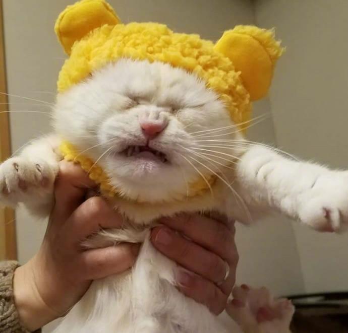 貓咪 試穿了貓奴新買的帽子..牠好痛苦