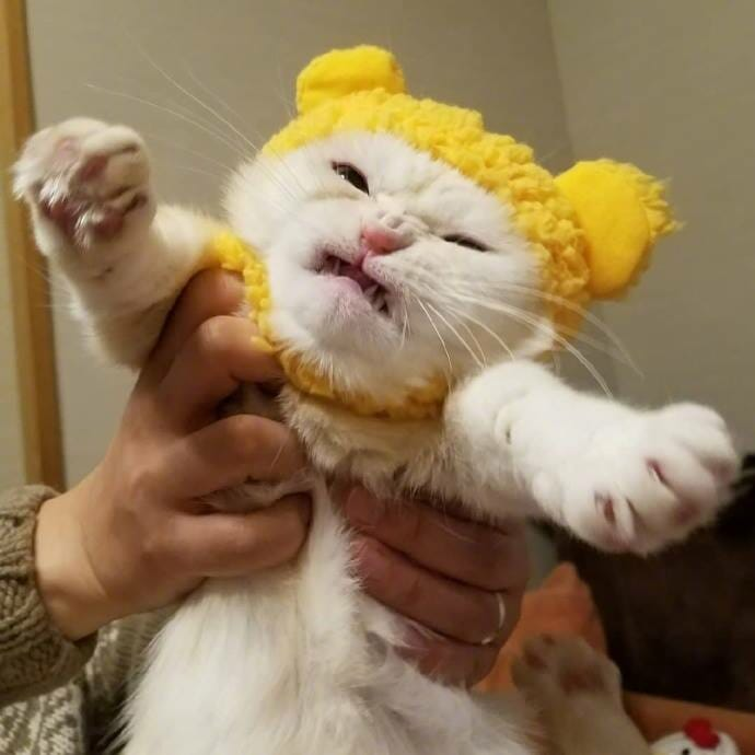 貓咪 試穿了貓奴新買的帽子..牠好痛苦 放開我