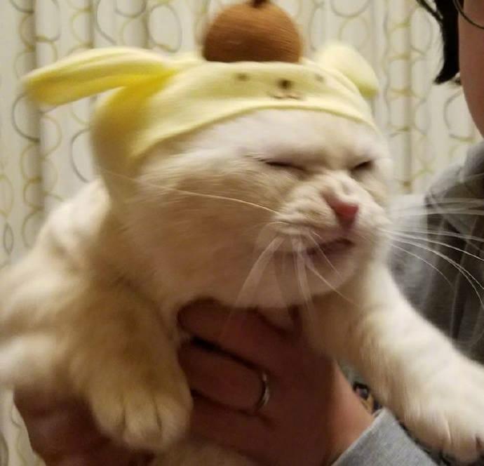 貓咪 試穿了貓奴新買的帽子..牠好痛苦 我好醜喔
