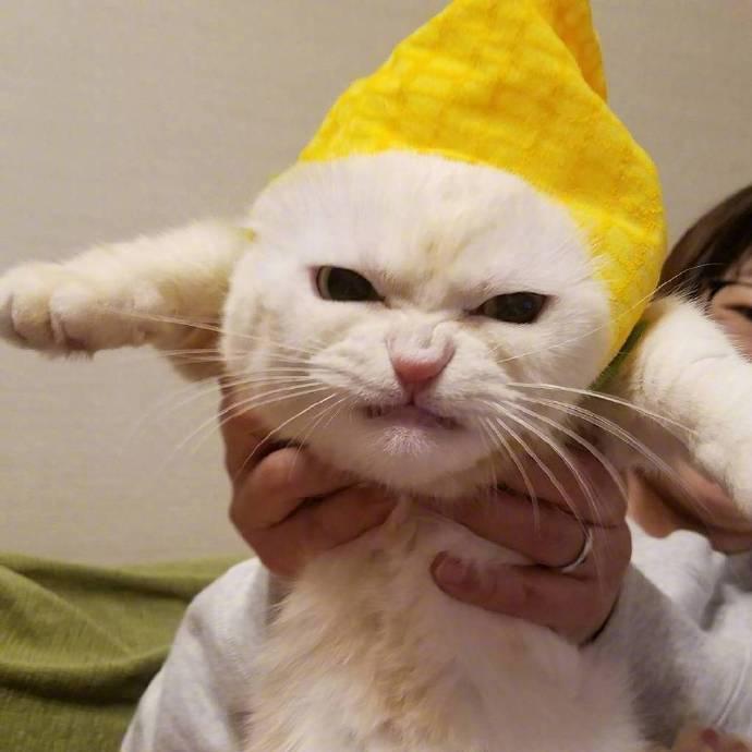 貓咪 試穿了貓奴新買的帽子..牠好痛苦 我真的要生氣囉