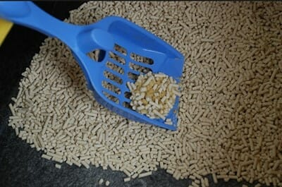 貓砂 鏟屎官如何選擇貓砂?玉米砂