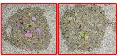 貓砂 鏟屎官如何選擇貓砂?檢測用砂