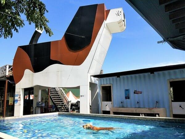 台中寵物餐廳 游泳池夏日大作戰 泳池
