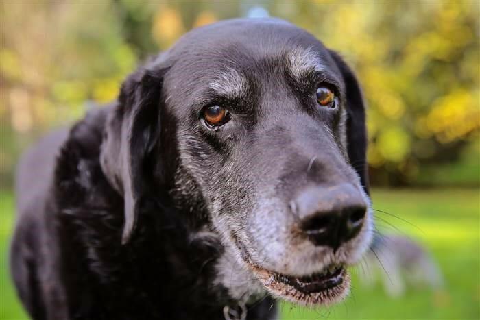 老狗 的照顧環境該怎麼做呢? 老狗