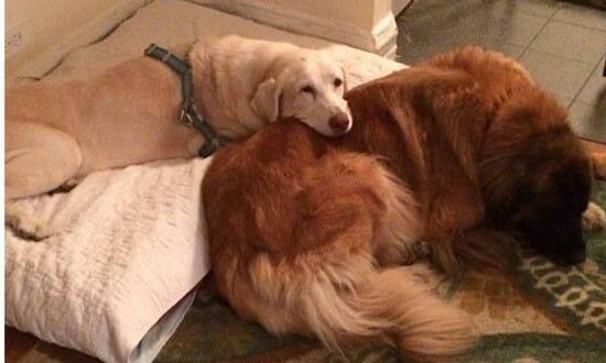 老狗 的照顧環境該怎麼做呢? 互相依偎