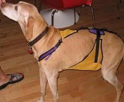 老狗 的照顧環境該怎麼做呢? 互相依偎行動輔助器