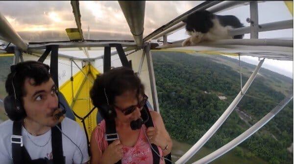 貓咪 朕還沒下飛機怎麼就… 嚇死我了