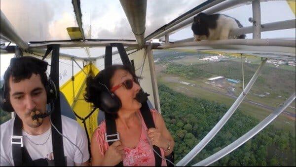貓咪主子 説:朕還沒下飛機怎麼就… 你從哪冒出來的