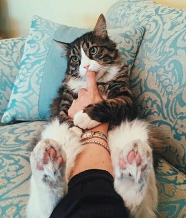 貓咪特殊癖好 太可愛 賣萌模樣像極小貝比!