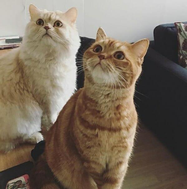 韓國橘貓 特殊才藝讓人意外 這真的是貓嗎?!