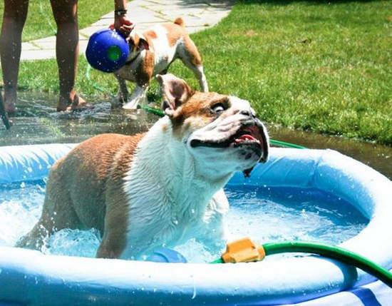 狗狗中暑 了嗎?我要沖涼