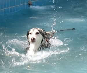 狗狗中暑 了嗎? 夏天就是要泡在水裡