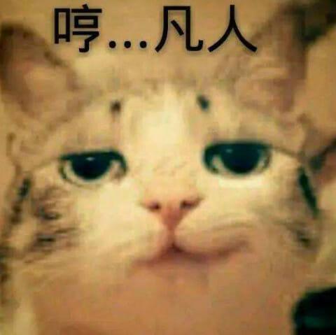 家貓有話說 投胎當家貓一定很爽嗎?