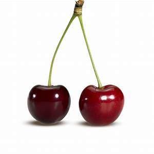 毛小孩 不能吃的東西有哪些?櫻桃