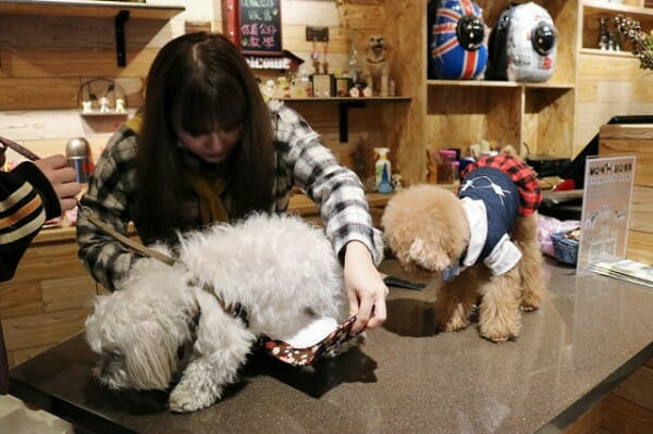 DogBoss 寵物餐廳帶著主子早午餐 狗狗綁禮貌帶