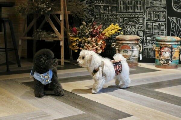 DogBoss 寵物餐廳帶著主子早午餐 狗狗綁禮貌帶在走路