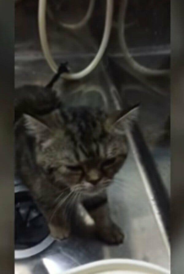 小貓 怕洗澡居然說出了… 人家不要洗澡啦!