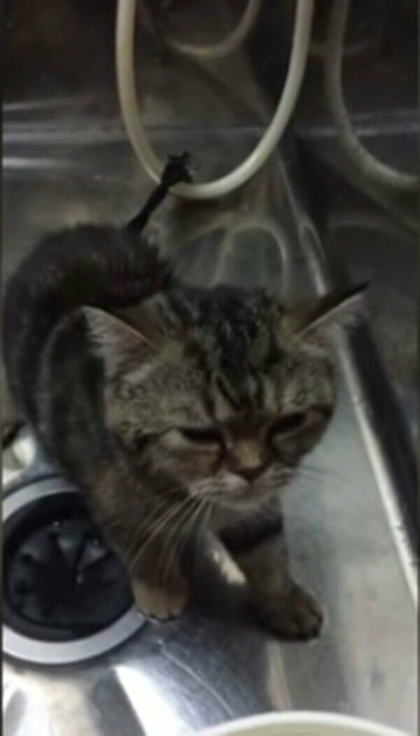 小貓 怕洗澡居然說出了… 可以不要洗嗎?