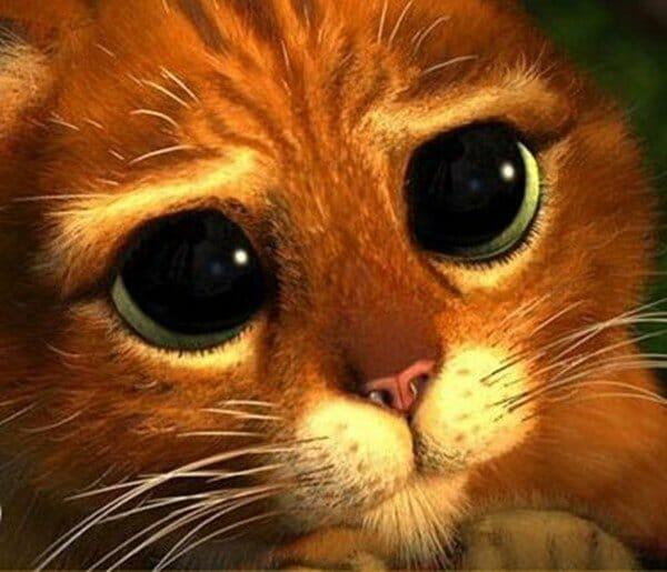 小貓 怕洗澡居然說出了… 靴貓