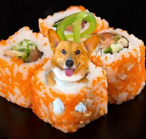 寵物 變身成了可口的美食 這是我最愛的蝦卵壽司嗎?