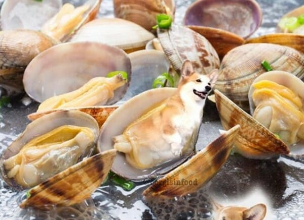 寵物 變身成了可口的美食 蚌殼精