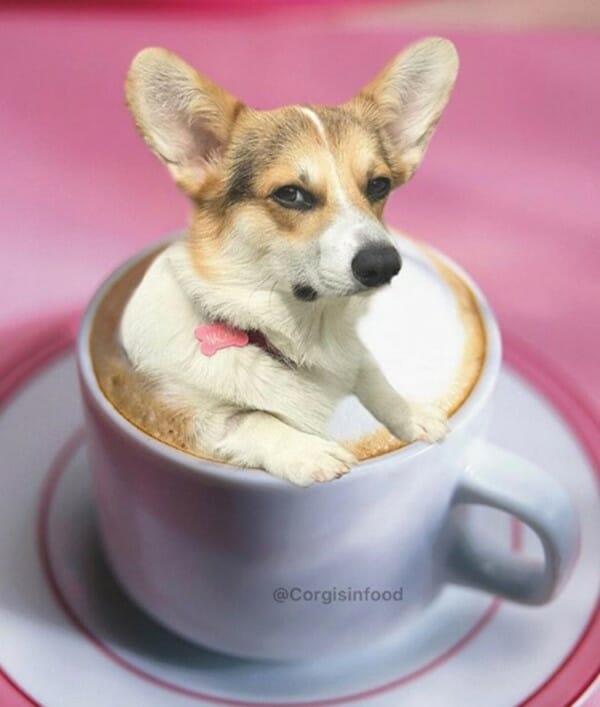寵物 變身成了可口的美食 你這是在泡湯嗎?