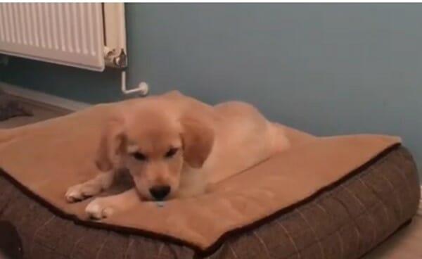 寵物成長 每天用一秒的時間… 看我想睡的樣子
