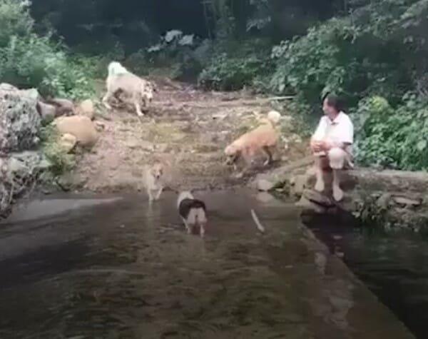 毛小孩 天雨路滑站不穩篇 金金開心玩水囉!