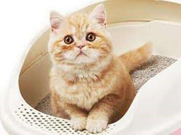 貓咪亂尿尿 怎麼辦? 選擇貓砂是很重要的環節