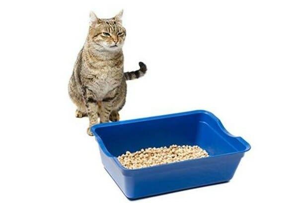貓咪亂尿尿 怎麼辦? 了解亂尿尿的原因