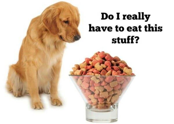 毛小孩鮮食 你該知道的事 其實或許牠們也不想天天吃飼料