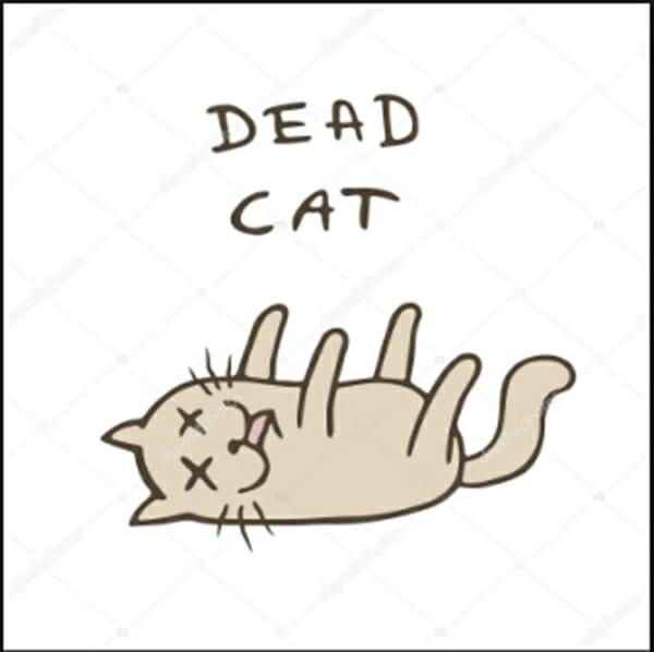 貓咪誤食 鏟屎官大人要特別的注意