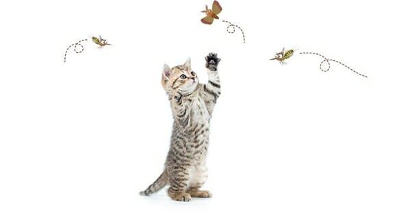 貓咪誤食 防蚊大作戰