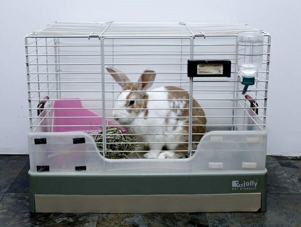 寵物兔 的正確照顧方式 這可是我自已的房間