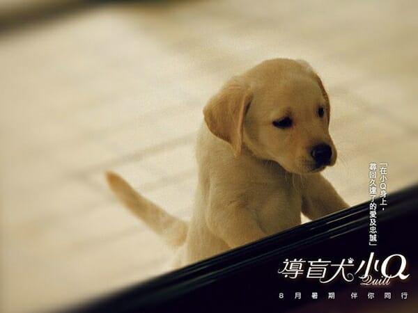 毛小孩電影 網友大推感人電影 導盲犬小Q