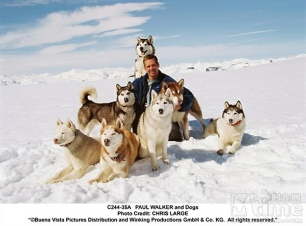 毛小孩電影 網友大推感人電影 南極大冒險