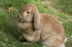 寵物兔 的正確照顧方式 人見人愛的兔兔